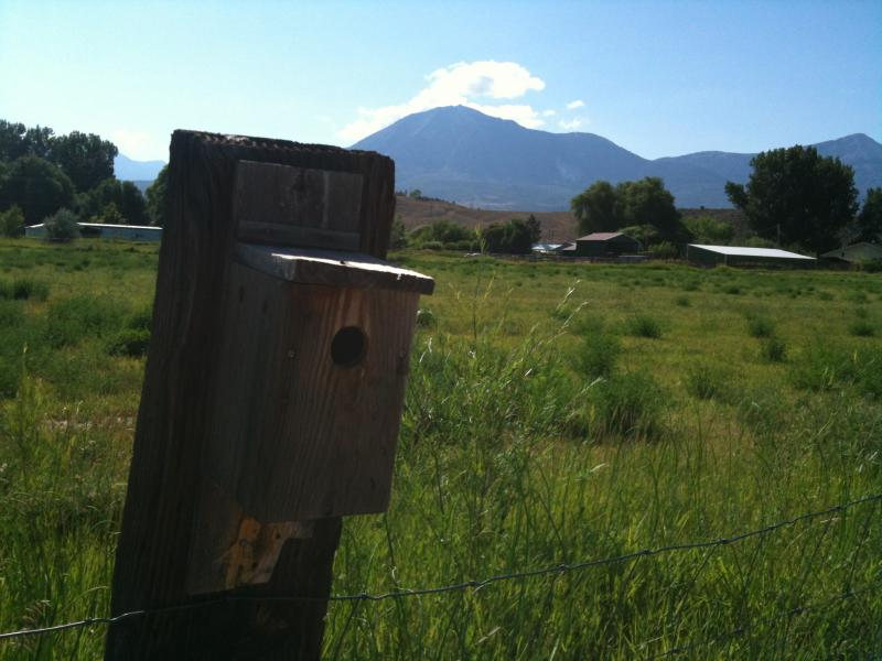 A birdhouse on Rain Crow Farm where four tree swallows nested this year for the first time, eating mosquitoes