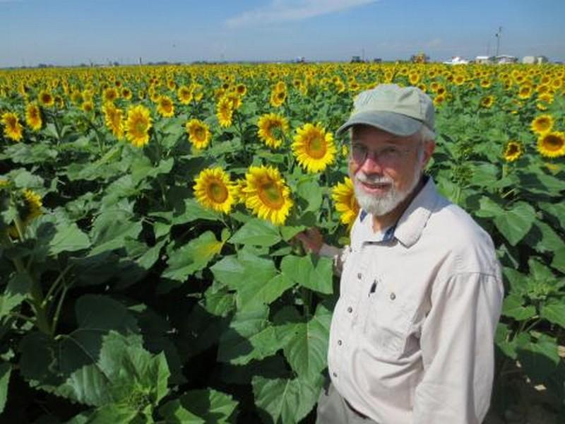 Tom Trout, a researcher at the U.S. Department of Agriculture who focuses on efficient and effective irrigation methods, checks sunflowers on a USDA research plot in Weld County, CO.