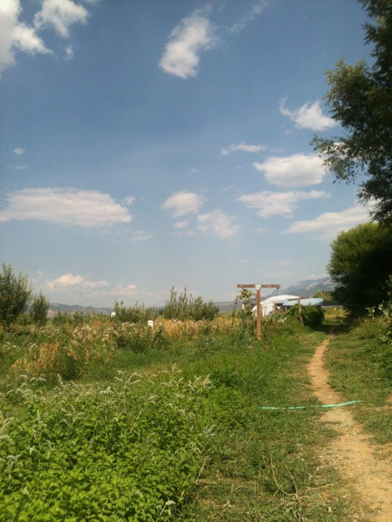 Thistle Whistle Farm near Hotchkiss, CO