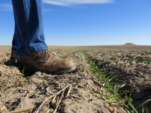 Farmers in Colorado, Kansas, Oklahoma and Nebraska harvest about one-third of the nation's wheat acres, according to the most recent Agricultural Census.