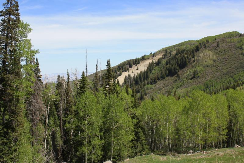 The scar, the area devoid of vegetation, on the mountain side is an older example of where a landslide happened on the Grand Mesa.