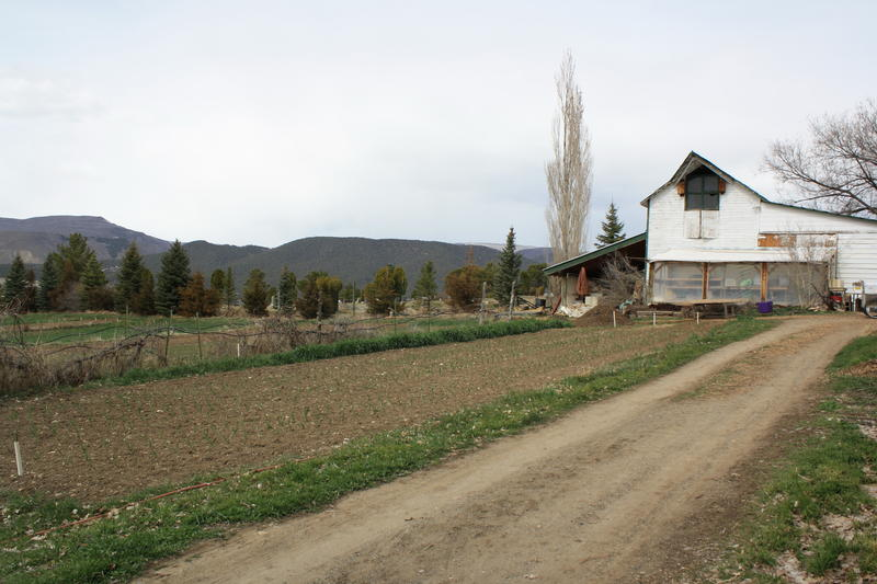 Small Potatoes Farm