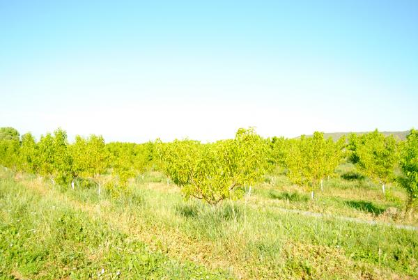 Orchards in Colorado's North Fork Valley