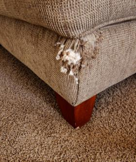 According to study authors, flame retardant chemicals can leach out from upholstered furniture, particularly if the foam is exposed through rips.