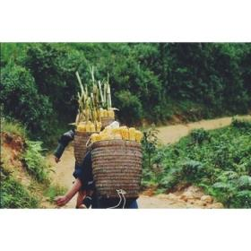 This picture displays authentic Hmong baskets in use. In Laos or Thailand Hmong people's reliance on agriculture and farming was significant. These baskets made the workload easier because they acted as a type of backpack basket and carried crops, wood, supplies and necessities for a day's work at the farm. It's a symbol of traditional labor within the Hmong Culture and is still used in skits and dances today to symbolize the history of our people's past. #iamhmong