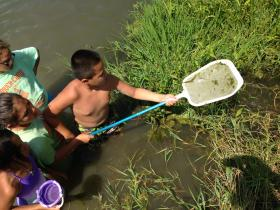 Kids hunt tadpoles on the San Joaquin for an afternoon activity.