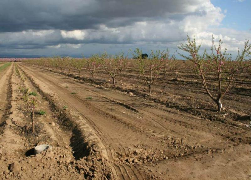 A photo from the environmental impact report for the proposed Carmelita Project mine depicts the orchards currently on the site.