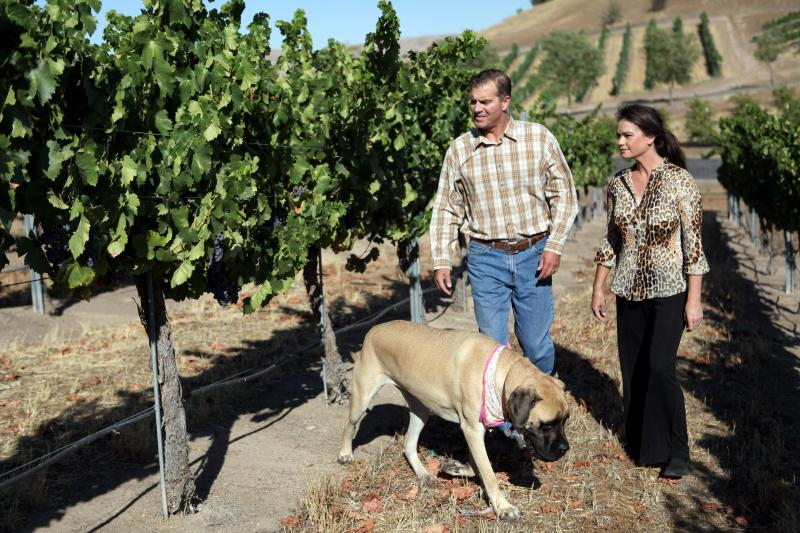 Todd and Tammy Schaefer walk through a neighbor's vineyard with their Old English Mastiff, Daisy Ray. Todd was working in a vineyard when he contracted valley fever.