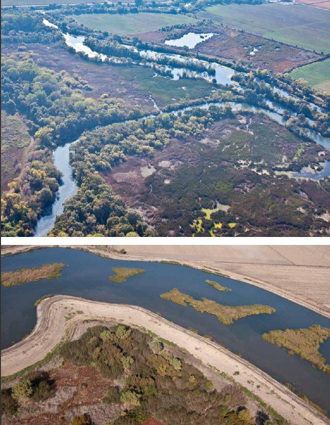 Top, Consumnes River delta. Bottom, Sycamore Slough (south of Woodbridge Road). Both November 8, 2011. (photos by William G. Miller, Cole~Miller Photography)
