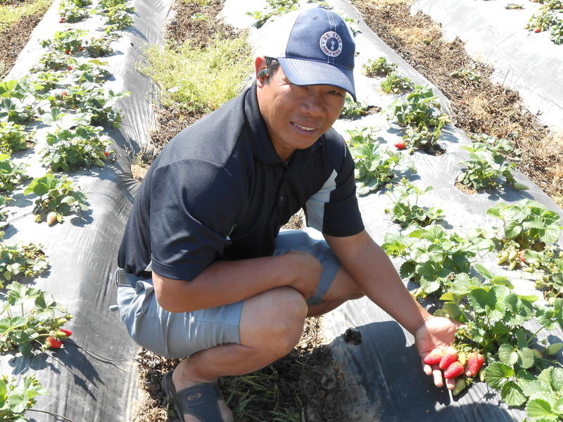 Pao Saephan is the first small farmer to sell his produce directly to Fresno Unified School District.