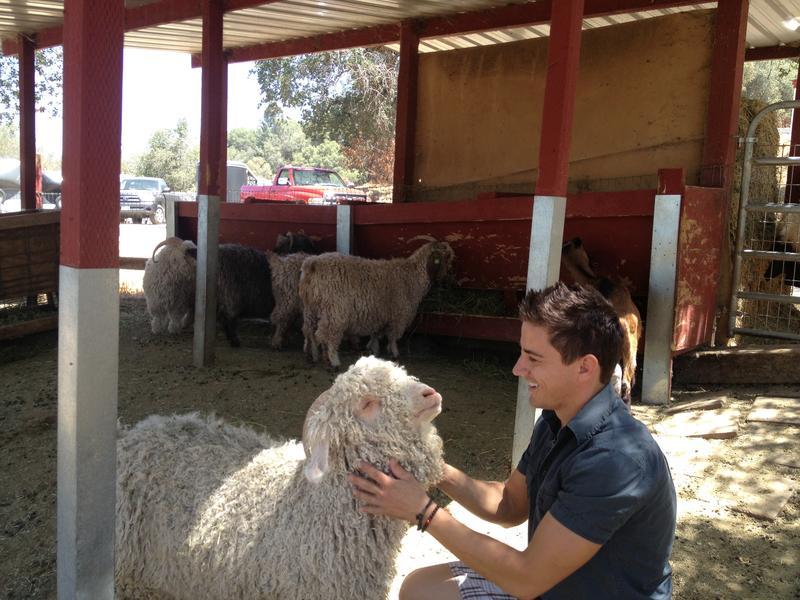 Allen Mesick raises Angora goats at Eureka Mohair Farm in Tollhouse.