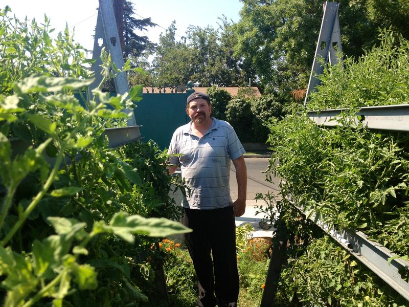 Nolan Schimdt of Tower Urban Family Farms has four urban plots of land where he grows tomatoes and other vegetbables.