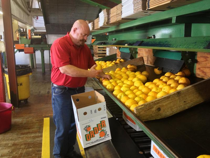 Kevin Serverns, an Orange Cove, Calif. citrus farmer says that the psyllid is a huge threat to the industry.