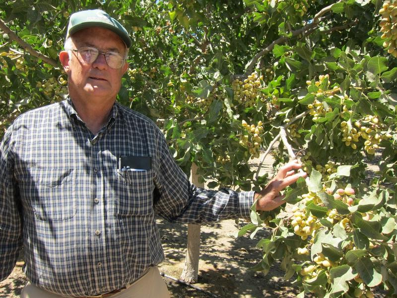 Kern County pistachio farmer Rod Stiefvater