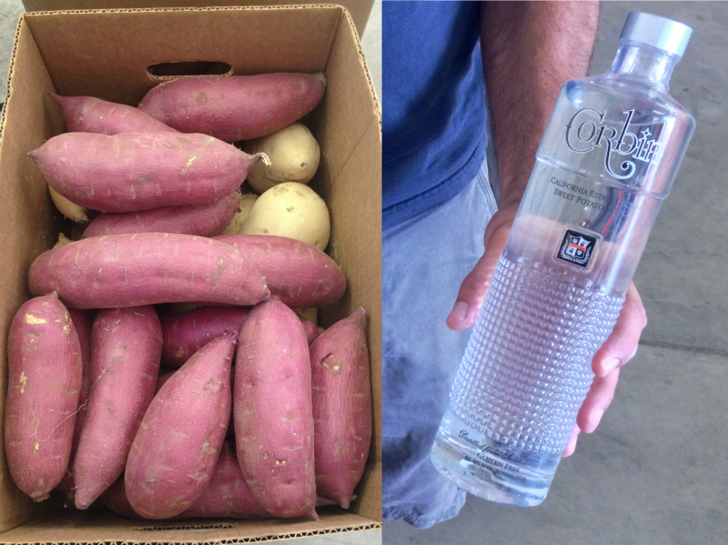 It takes 10 pounds of sweet potatoes to make a single 750 ml bottle of Corbin Vodka.