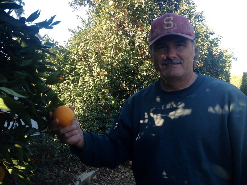 James McFarland farms over 480 acres of citrus east of Clovis.