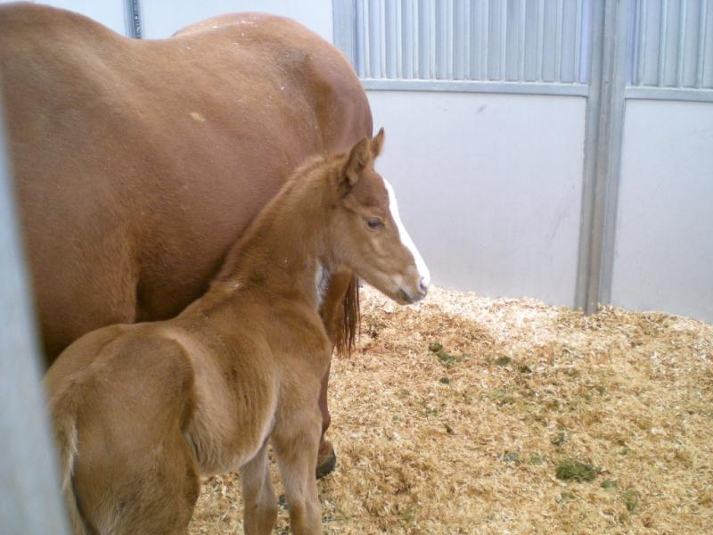 The Kentucky Derby Champion a day after he was born.
