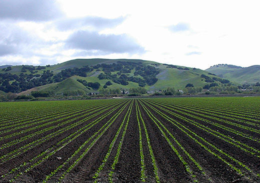robots could be headed to central valley farms valley public radio