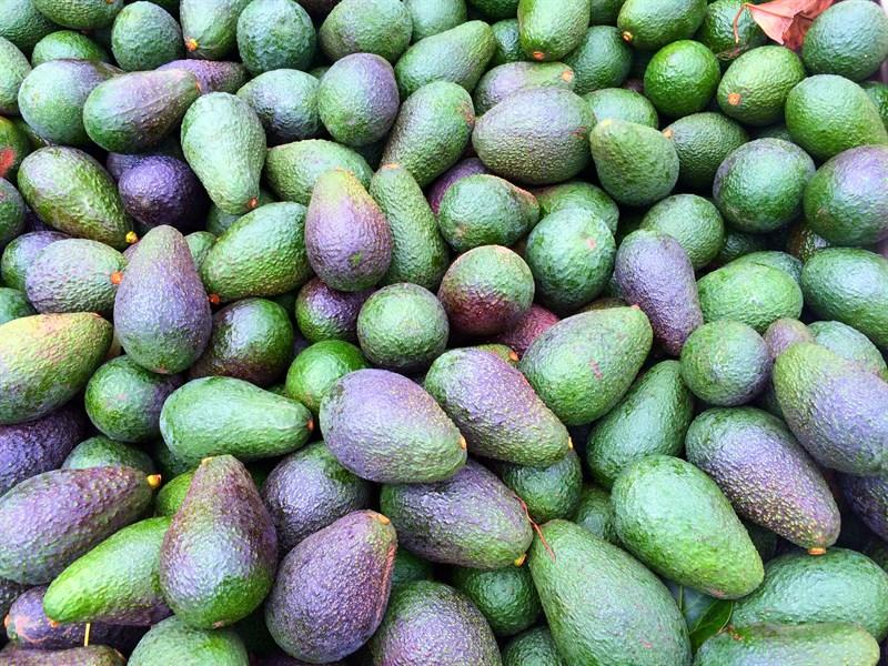 New Growing Technique Could Save Drought Stricken Avocado Farmers