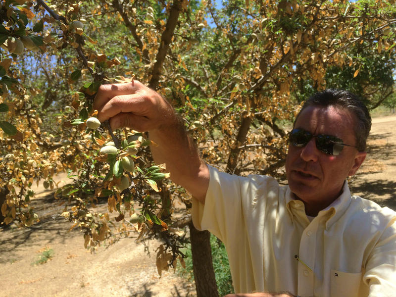 Paul Parreira is a partner with Rpac Almonds near Los Banos, California. Many of his growers orchards are impacted by salt burn.