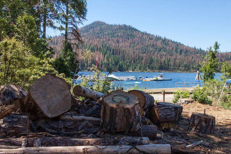 Officials have removed scores of dead trees, killed by drought and bark beetles, in and around the mountain community of Bass Lake.