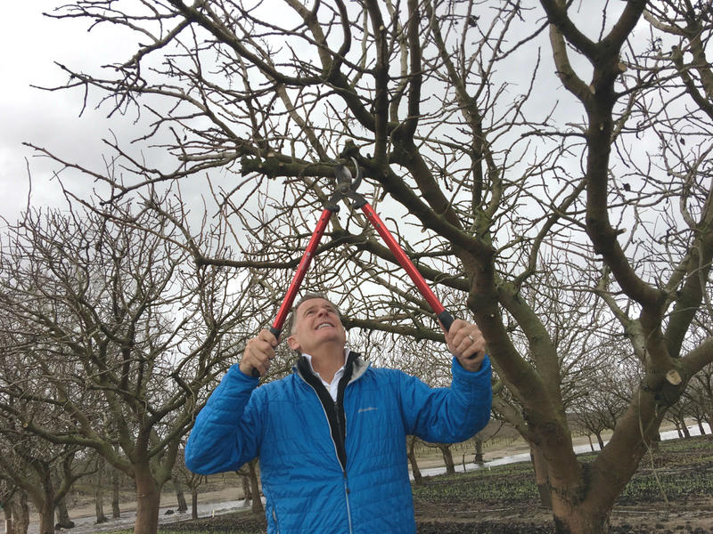 Tom Coleman's crews are working across the region to prune pistachios trees before buds set in.