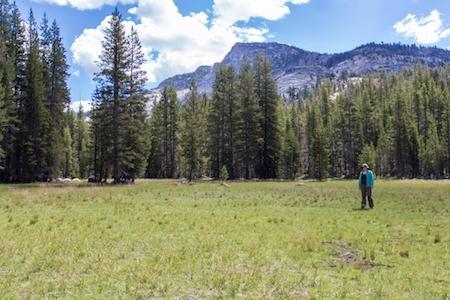 Kaitlin Lubetkin surveys a Sierra Nevada subalpine meadow.