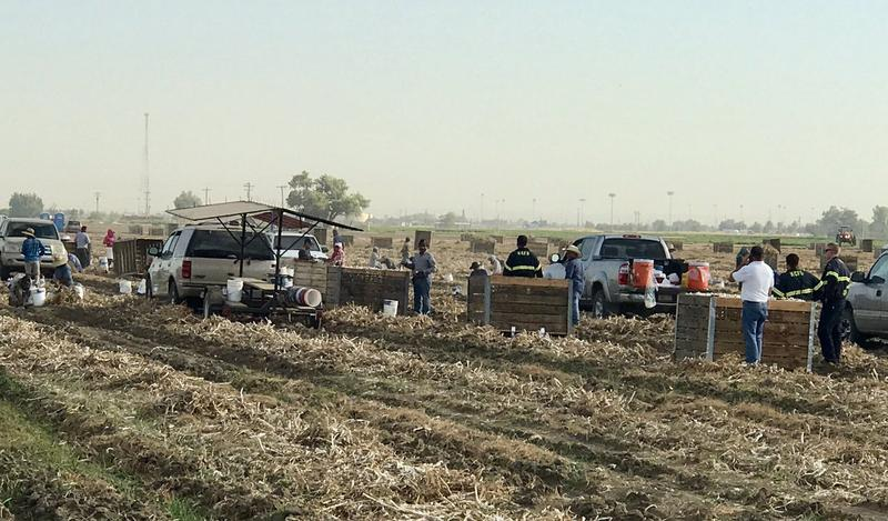 14 farmworkers were treated for exposure to the chemical today in Bakersfield
