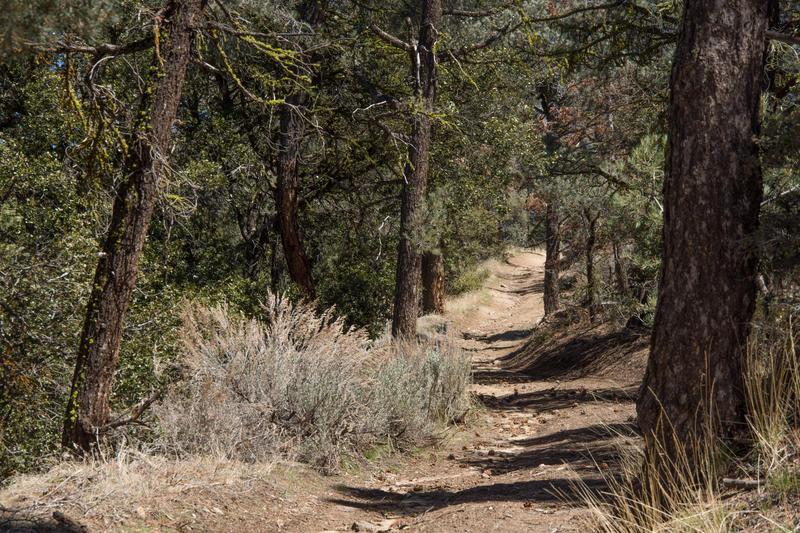 A trail on Tecuya Ridge