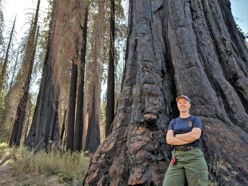 Rebecca Paterson, firefighter and fire information officer for Kings Canyon and Sequoia National Parks, stands in a copse of trees blackened by the 2015 Rough Fire.