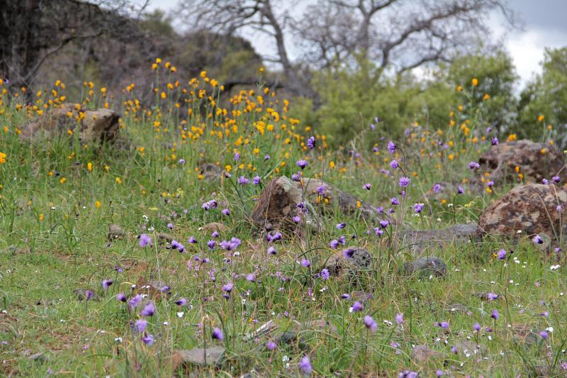 Wildflowers greet hikers near the summit