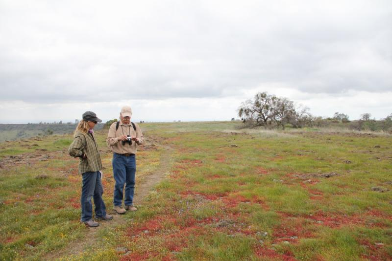 The top of the hill is as flat as the Valley floor, biologists suspect say this is due to an ancient lava flow.