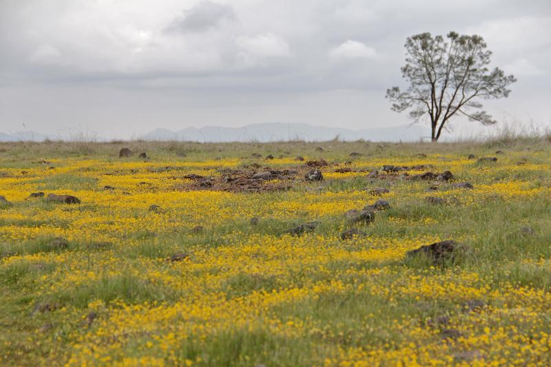 Wildflowers cover the nearly flat surface of the table at McKenzie Preserve