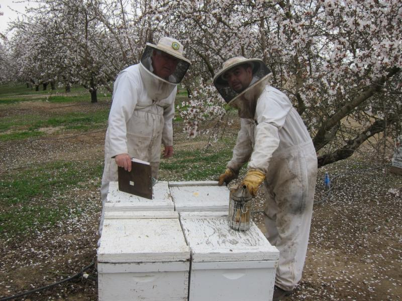 Orin Johnson and business partner Jey Rolon work on hives in an orchard