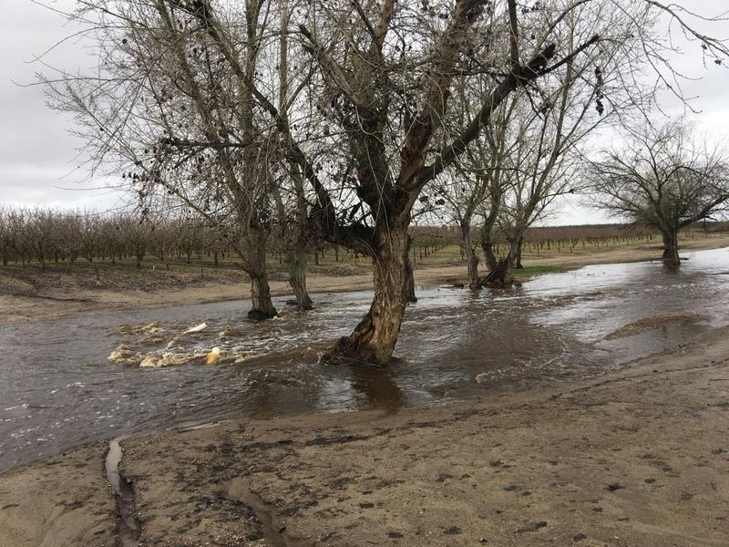 It's rained so much north of Fresno in Madera County that a large creek's formed on this pistachio farm.