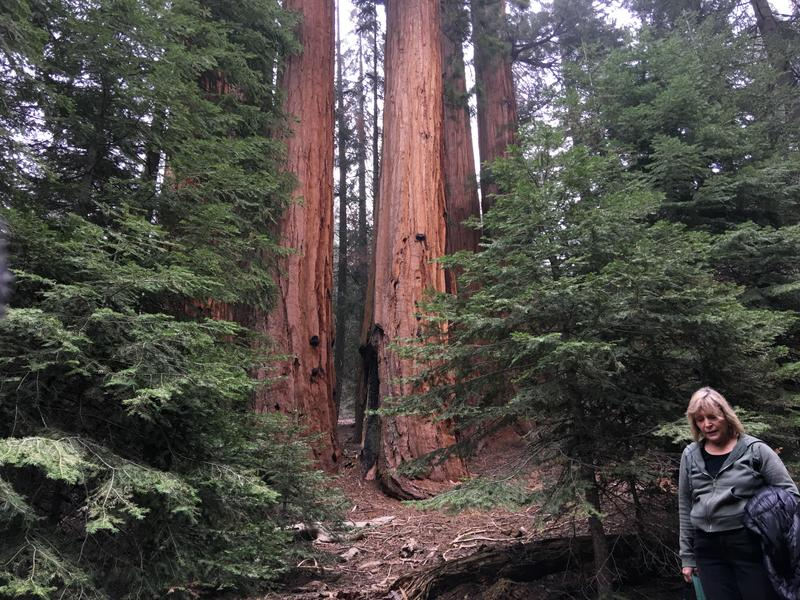 Carla Cloer has advocated for the Giant Sequoias for decades.