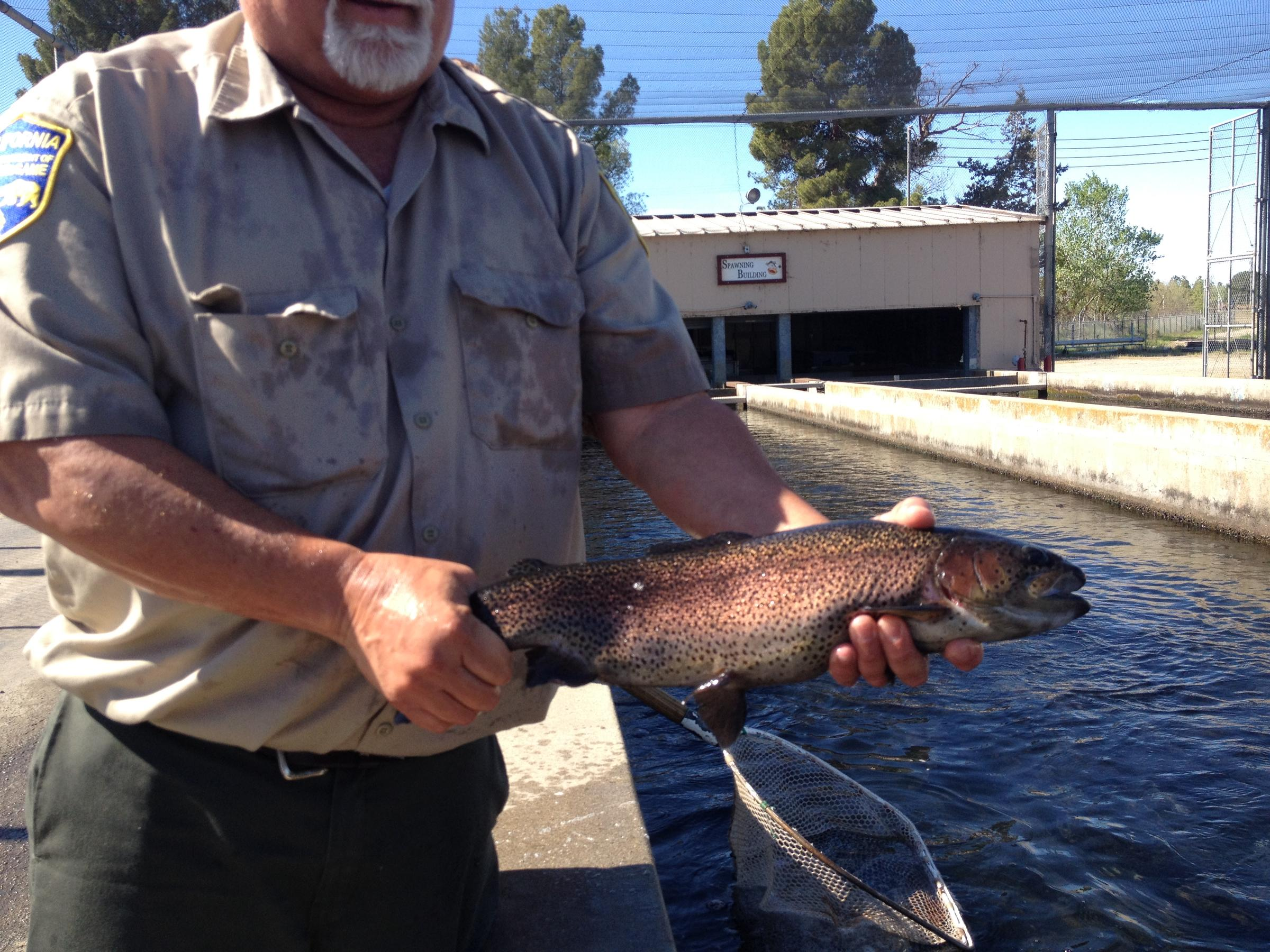 Voices of the drought hatcheries where will the fish go for California fish hatcheries