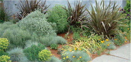 Drought Tolerant Plans Growing In Popularity Valley