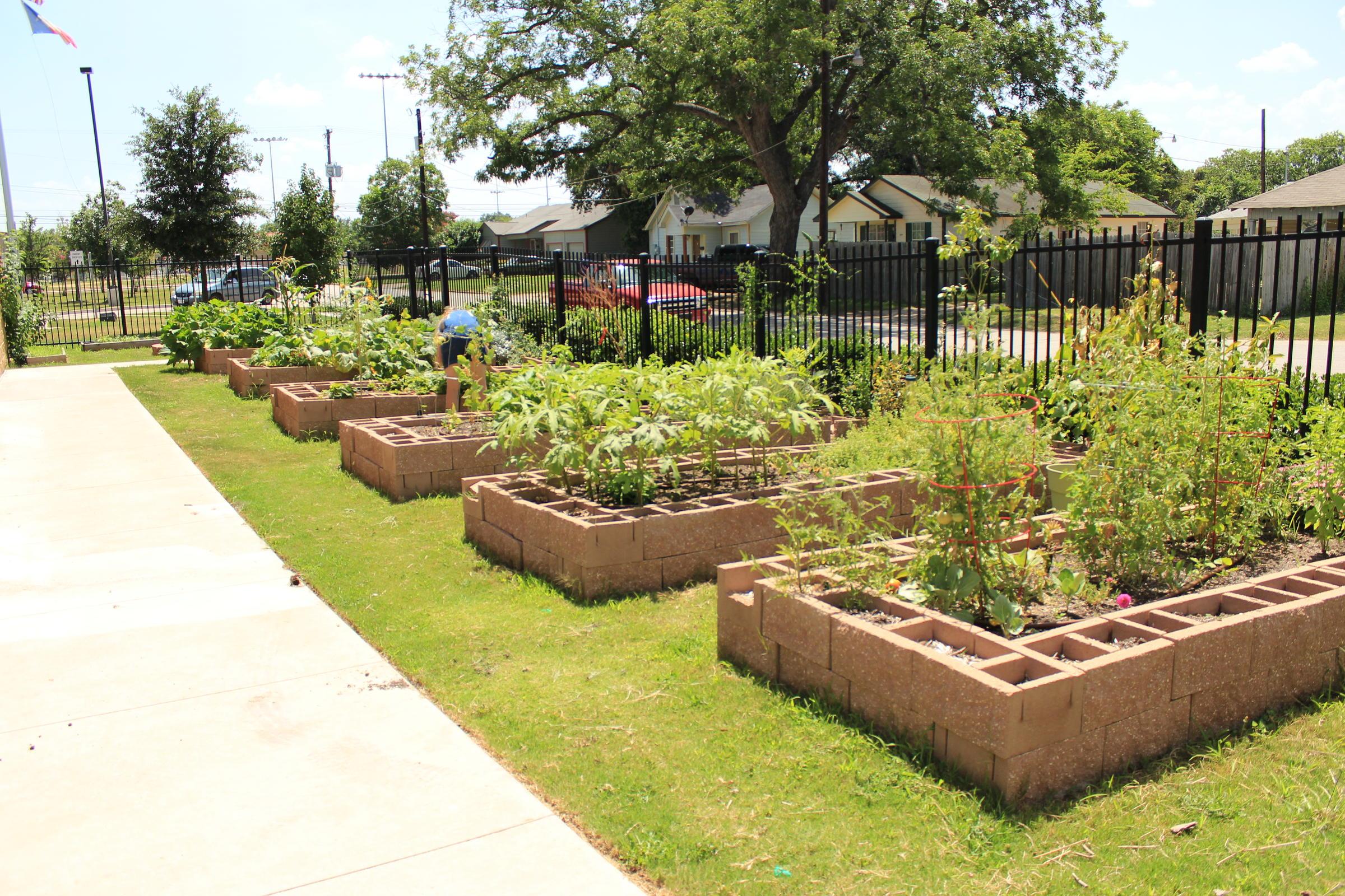 can urban gardening alleviate waco 39 food deserts 39 kwbu. Black Bedroom Furniture Sets. Home Design Ideas