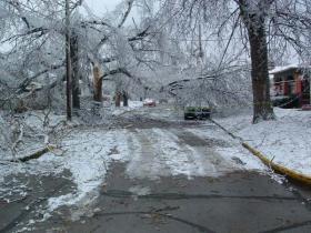 File photo of ice damaged trees
