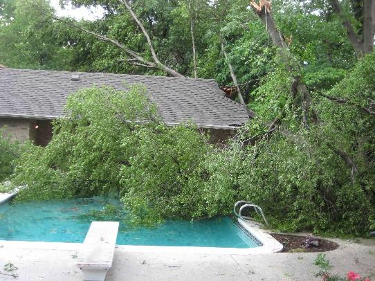 A large tree lands in a pool near 61st and Harvard.
