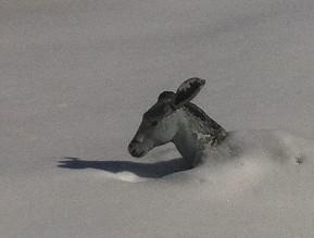 """Proof that Oklahomans are up to their \""""donkey\"""" in snow."""