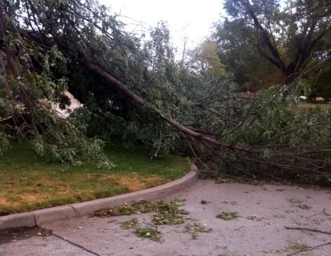 A tree blocks 69th East Avenue just to the north of 31st Street