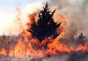 A cedar tree on fire
