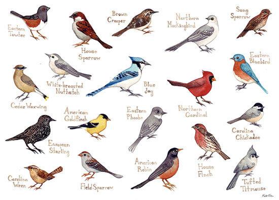 birds public radio tulsa
