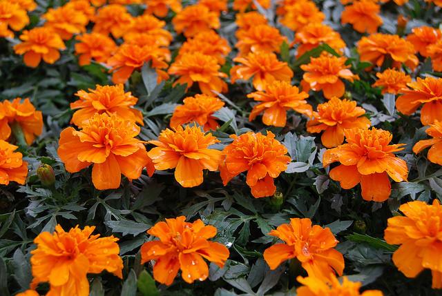 Southwood garden center tulsa