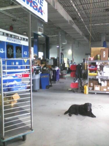 Inside the EMSA headquarters, with Lansing, EMSA's black lab
