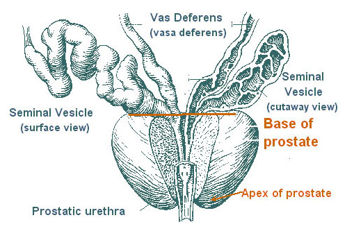 Annual Prostate Cancer Screening Not Needed For Most Men  But Some Can Still Benefit