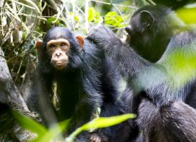 A glimpse of life at the site of the Goualougo Triangle Ape Project.