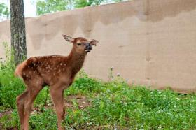 This male calf was born in transit from Kentucky.